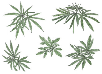 Watercolor set of green branch of big hemp and leaves
