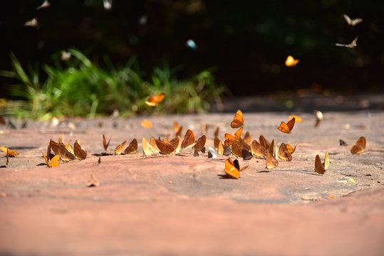 Beautiful of butterflies in forest