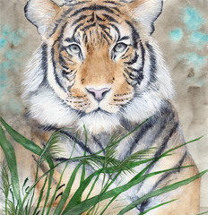 Watercolor picture of the tiger lying in green grass with sepia background