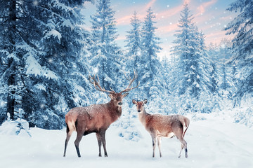 Wall Mural - Family of noble deer in a snowy winter forest at sunset. Christmas fantasy image in blue and white color. Pink clouds. Snowing. Winter wonderland.