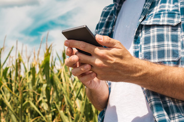 Agronomist typing text message on smartphone out in corn field