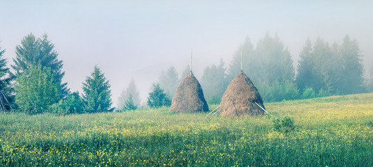 Wall Mural - Haymaking in a Carpathian village. Misty summer panorama of mountain valley with fresh grass and blooming flowers, Ukraine, Europe. Instagram filter toned.