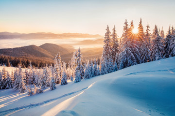Photo sur Plexiglas Campagne Impressive winter morning in Carpathian mountains with snow covered fir trees. Colorful outdoor scene, Happy New Year celebration concept. Artistic style post processed photo.