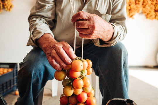 PUGLIA / ITALY -  AUGUST 2019: The old tradition of hanging cherry tomatoes on the wall to preserve them for wintrr time in the south of Italy