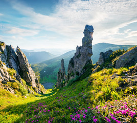 Wall Mural - Colorful summer scene of Carpathian mountains. Impressive morning view of Subalpine meadow Gadzhina from Shpytsi mountain, Ukraine, Europe. Beauty of nature concept background.