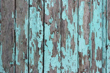 mint wood background. Scratched turquoise paint on a wooden plank wall. Background, texture