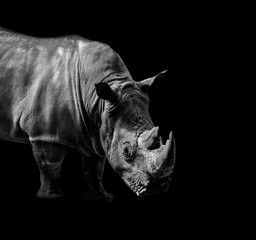 Foto op Aluminium Neushoorn Wild animals in black and white