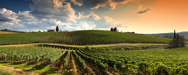 In de dag Wijngaard beautiful vineyard in tuscan countryside at sunset with cloudy sky in Italy.