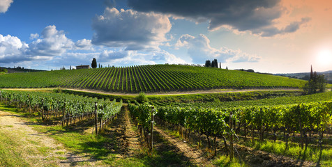 Poster Wijngaard beautiful vineyard in tuscan countryside at sunset with cloudy sky in Italy.