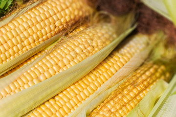 an ear of corn. harvest. natural product.