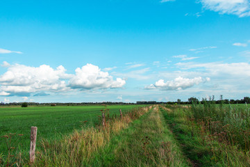 Path between dutch landscapes