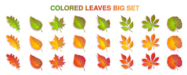 Autumn leaves set colorful. Isolated on white background. Simple cartoon flat style. Vector illustration.