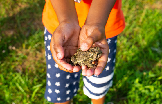 Young boy holding a common toad