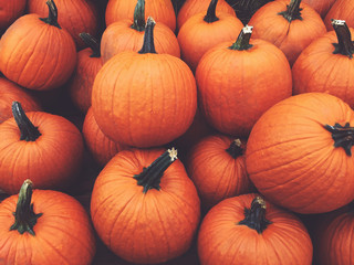 Fall Orange Pumpkins Harvest Background