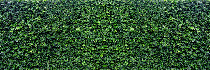 green leaves panoramic background