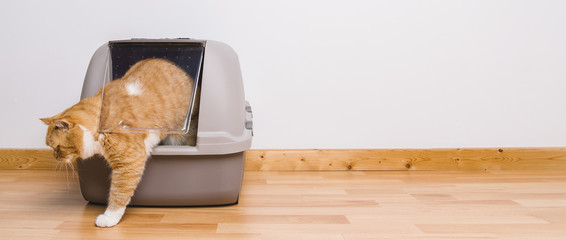 Tabby cat step outside a litter box after poops or pee, banner size, copyspace for your individual text.