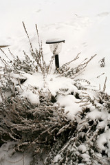 A natural ikebana created by nature. Solar lamp with hyssop covered with snow after winter snowstorm.