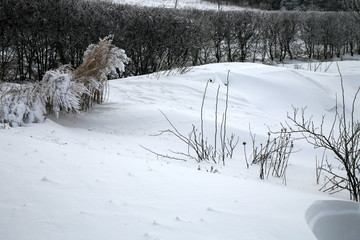 A rural garden covered with snow after a night snowstorm. Extreme weather