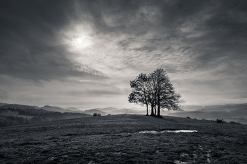 Foto auf Acrylglas Wiesen / Sumpfe Lonely tree in mountains at cloudy day, Spisz, Poland