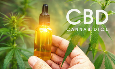 Hand holding bootle of cbd oil biological and ecological herbal pharmaceutical at a Hemp farm. Concept of herbal alternative medicine, cbd oil, pharmaceutical industry