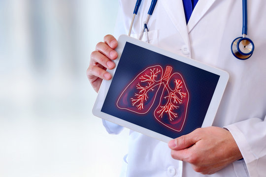 Doctor showing lungs on a table close up