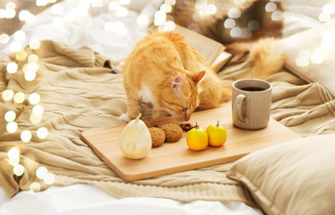 Fototapete - pets, hygge and domestic animal concept - red tabby cat sniffing food on bed at home