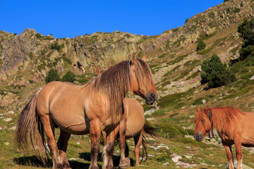 Brown horse with long hair on the mountain. Animals concept