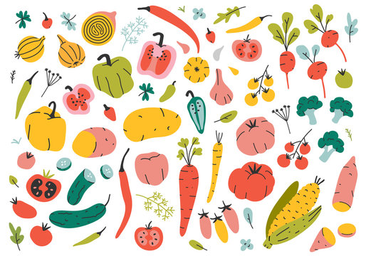 Collection of vector illustrations of different vegetable cook ingredients. Print poster with various veggies. Carrot, pepper, tomato, radish and broccoli elements isolated on white.  Hand drawn icons