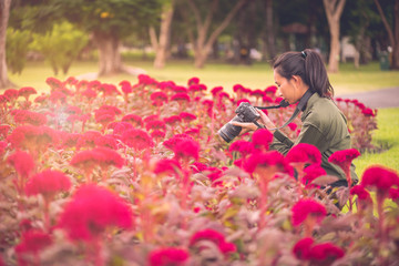 Beautiful Asian female photographer with an outdoor camera, shooting a full bloom of red flowers in a flower field.