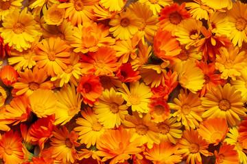 Calendula is a joyful flower. Yellow and orange calendula flowers as a background.
