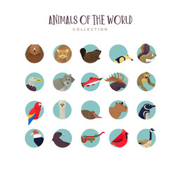 Animal icon collection of exotic wildlife symbols