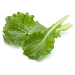 Fototapete - Close up studio shot of fresh green endive salad leaf isolated on white background.