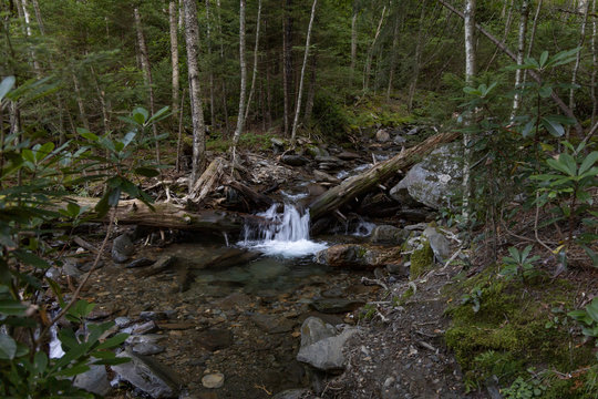 Water rushing over boulders in a creek in the Great Smoky Mountains National Park