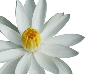 isolated on white half of white lotus flower placed on the left side of the picture.
