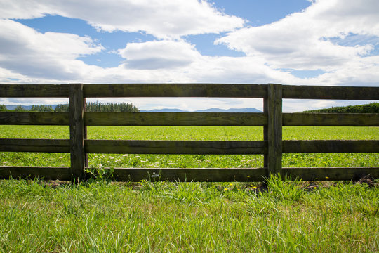 A wooden farm fence divides up grassy farm fields in Canterbury, New Zealand. A blue sky and white clouds spring day