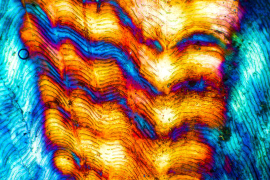 Abstract micrograph of a fish scale from a yellowfin tuna.