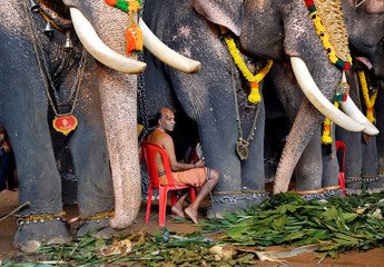 A mahout sits between elephants which are participating in festivities marking the annual harvest festival of Onam at a temple on the outskirts of Kochi