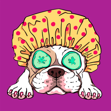 Vector illustration with a cute french bulldog in shower cap. Drawn puppy in cartoon style. color portrait of dog in spa. Image for printing on clothes