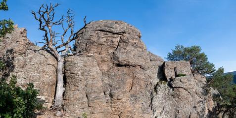 Toter Baum aus dem Felsen