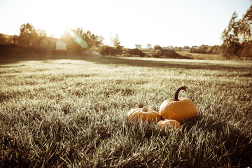 three big orange pumpkins in the grass field