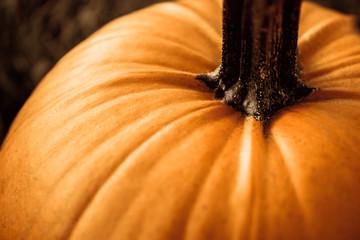big orange pumpkin in the field