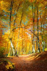 Autumn path in golden forest