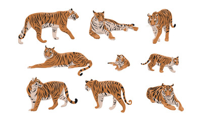 Set of realistic tiger and cubs in different poses. The tiger stands, lies, goes, hunts. Animals of Asia. Panthera tigris. Big cats. Predatory mammals.