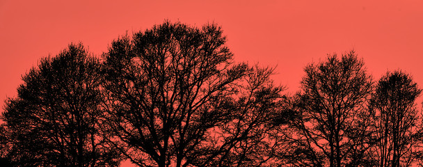 Abstract image of fine leafless branches on black trees against a red-hot background