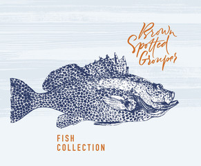 Brown spotted grouper fish brush illustration