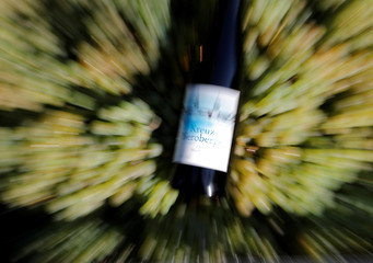 A bottle of Kreuzneroberger Riesling 2016 vintage wine is pictured during the harvest of Riesling grapes at the Weingarten vineyard at Berlin's district Kreuzberg Friedrichshain