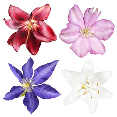 Fototapete - Set of lilies and clematis isolated on white background