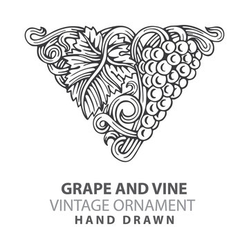 Grape. Hand drawn grape and vine engraving style illustrations set. Bunch of grapes vector design element. Grape and vine logo and background. Wine theme grape and vine vintage style ornament. Part of