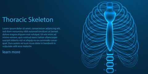 Thoracic skeleton. X ray theme concept on blue background. vector illustration.