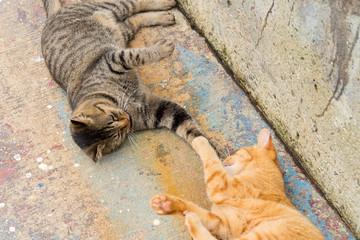 写真素材:猫、二匹、手、仲良し、遊び